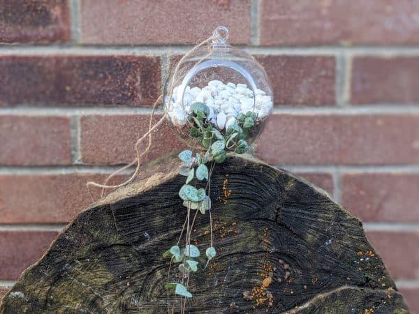 Hanging String of Hearts Terrarium