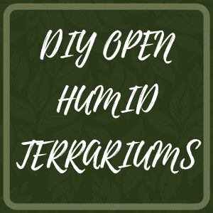 DIY Open Humid Terrariums