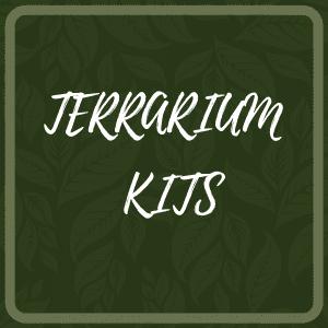 Terrarium Kits